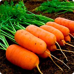 Семена Морковь Арон F1, 0,5 г, Элком Семена 220481 по цене 65
