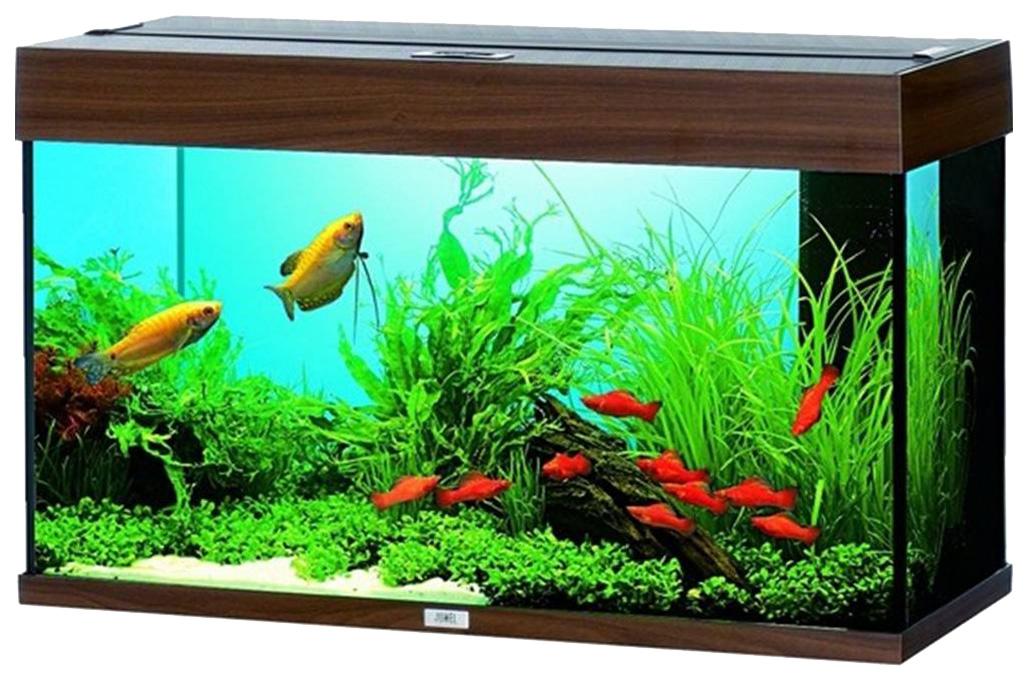 картинки с видами аквариумов лес, обязательно найдете
