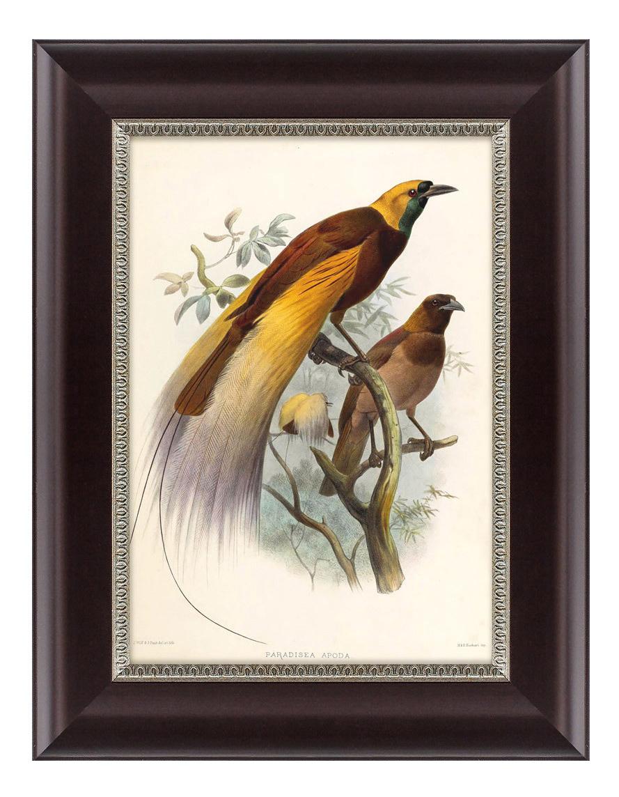 Картина Картины в Квартиру Большая Райская Птица (25х33 см) фото