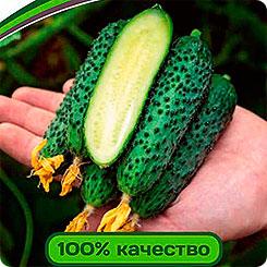 Семена Огурец Эстет F1, 5 шт, Partner 211511 по цене 79