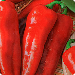 Семена Перец острый Красный толстяк, 0,3