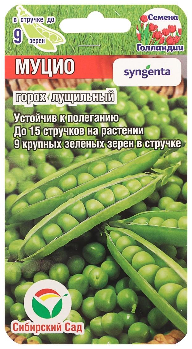Семена Горох Муцио, 4 г Сибирский сад