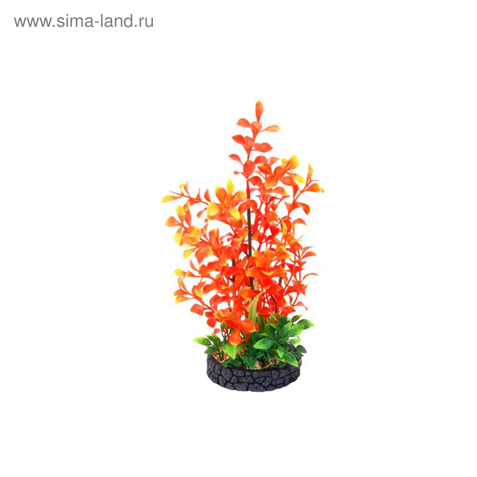 Растение аквариумное Композиция №31, 22х9х6 см