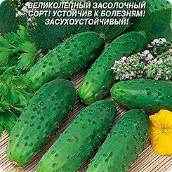 Семена Огурец Дальневосточный 27, 12 шт, Плазмас