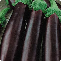 Семена овощей Русский огород 141078 Баклажан Король рынка F1 35 шт. фото