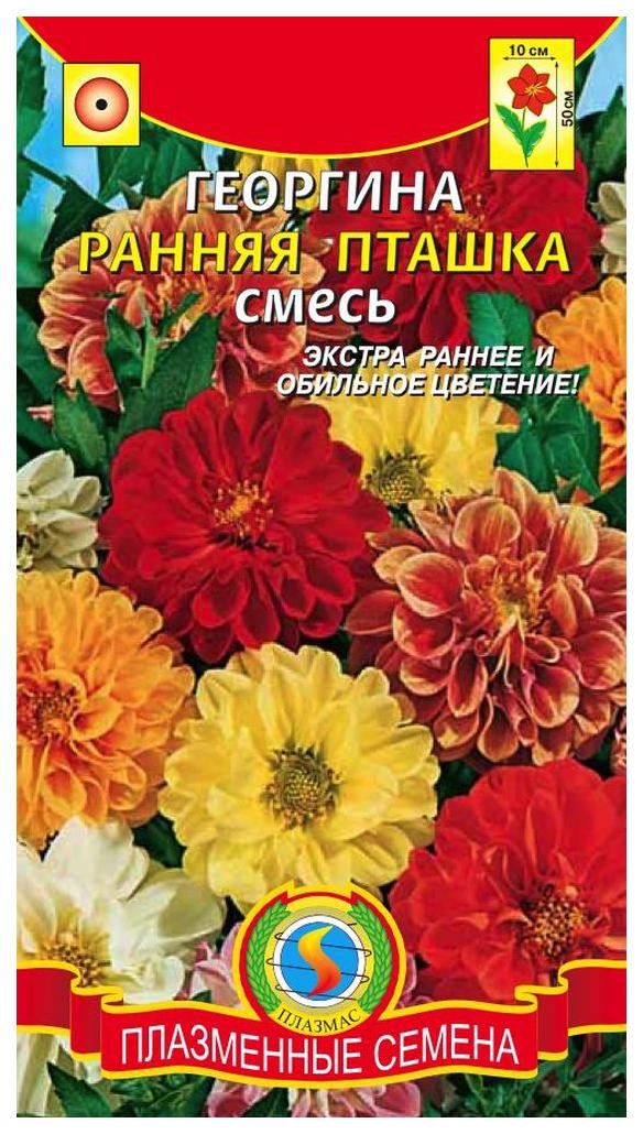 Семена Георгина Ранняя пташка, Смесь, 12 шт, Плазмас