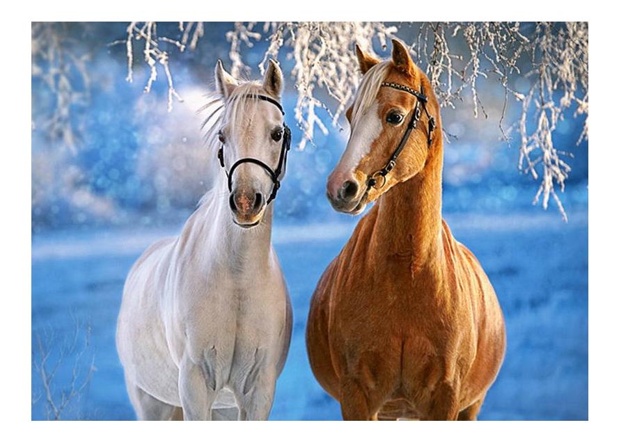Купить Пазл Castorland Лошади зимой 260 деталей, Пазлы