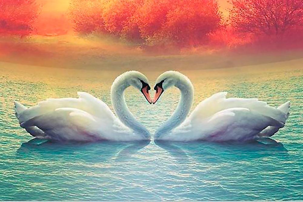 Картинки о любви нежности и преданности