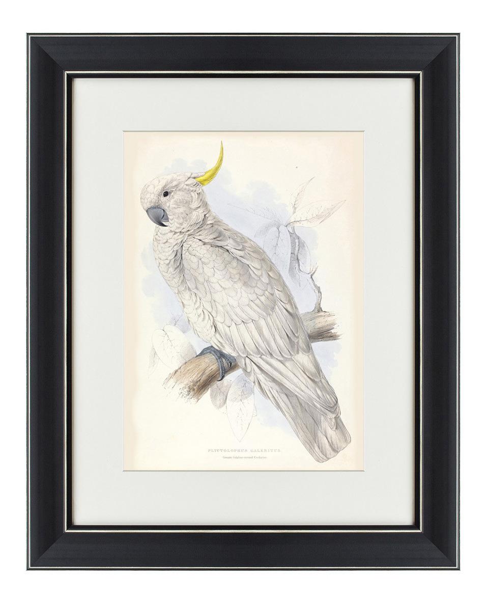 Картина Картины в Квартиру Белый Какаду (42х52 см) белый какаду 42 х 52 см по цене 3 495