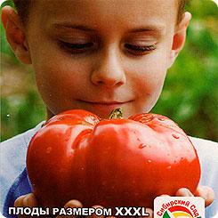 Семена Томат Бугай Красный, 20 шт, Сибирский