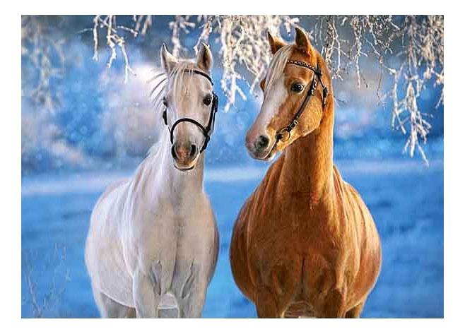 Купить Лошади зимой 260 деталей, Пазл Castorland Лошади зимой 260 деталей, Пазлы