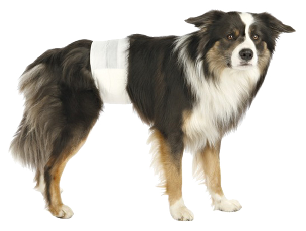 Подгузники для домашних животных TRIXIE для собак одноразовое