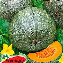 Семена Тыква Веснушка, 5 шт, Premium seeds