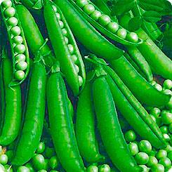 Семена Горох Алтайский Изумруд, 10 г, Семена