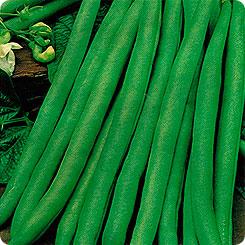 Семена Фасоль овощная Нагано, 5 г, Престиж