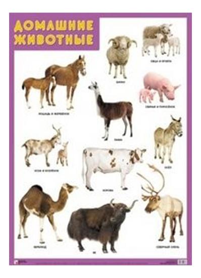 Купить Плакат Домашние животные, Мозаика-Синтез, Подготовка к школе