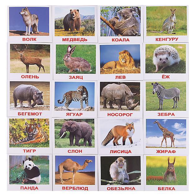 Купить Игра Вундеркинд с пеленок Мини-дикие животные, Дидактические игры