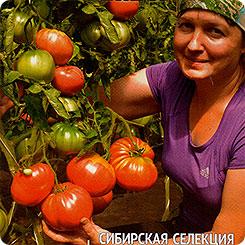Семена Томат Зимаревский великан, 20 шт, Сибирский
