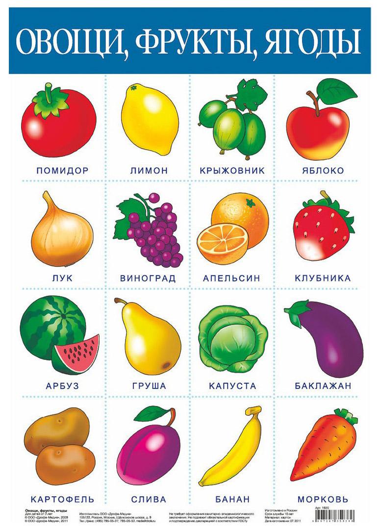 Обучающий плакат Дрофа-Медиа Овощ и Фрукты. Ягоды
