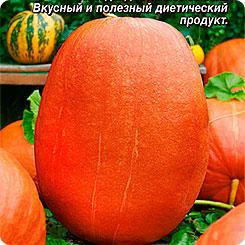 Семена Тыква крупноплодная Сахарный гигант, 2