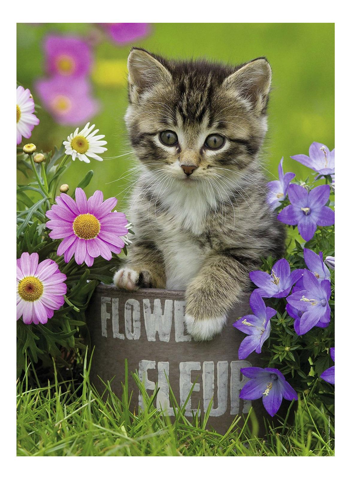 фетра котята с цветами картинки состоять