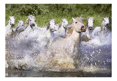 Пазл Educa Белые камаргские лошади 1000 деталей
