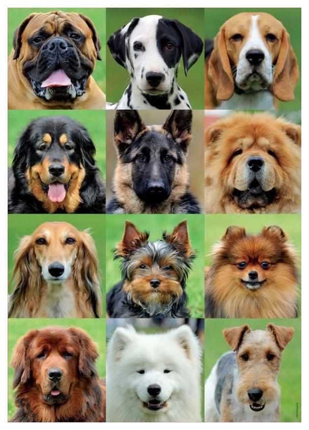 Купить Пазл Educa Коллаж собаки 500 элементов, Пазлы