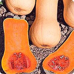 Семена Тыква Виолончель, 6 шт, Биотехника