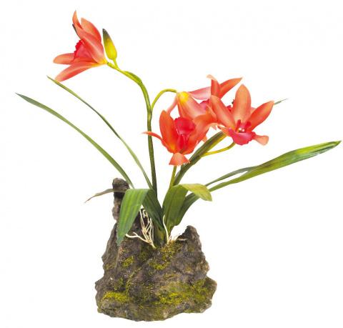 Декоративное растение LUCKY REPTILE