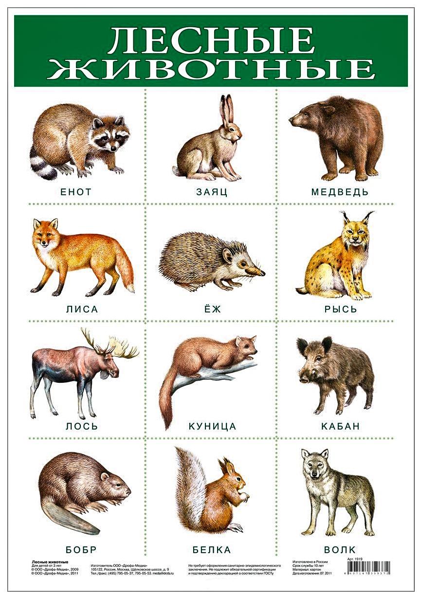 Обучающий плакат Дрофа-Медиа лесные Животные
