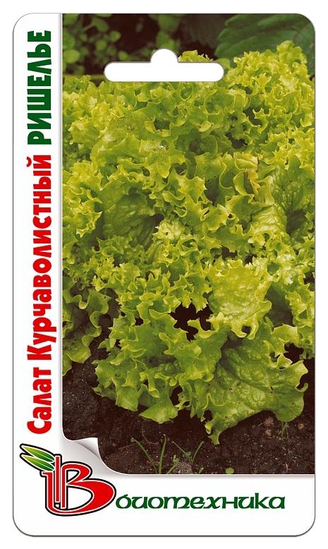 Семена Салат курчаволистный Ришелье, 0,3 г Биотехника