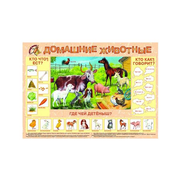 Маленький Гений плакат Маленький Гений Домашние Животные фото