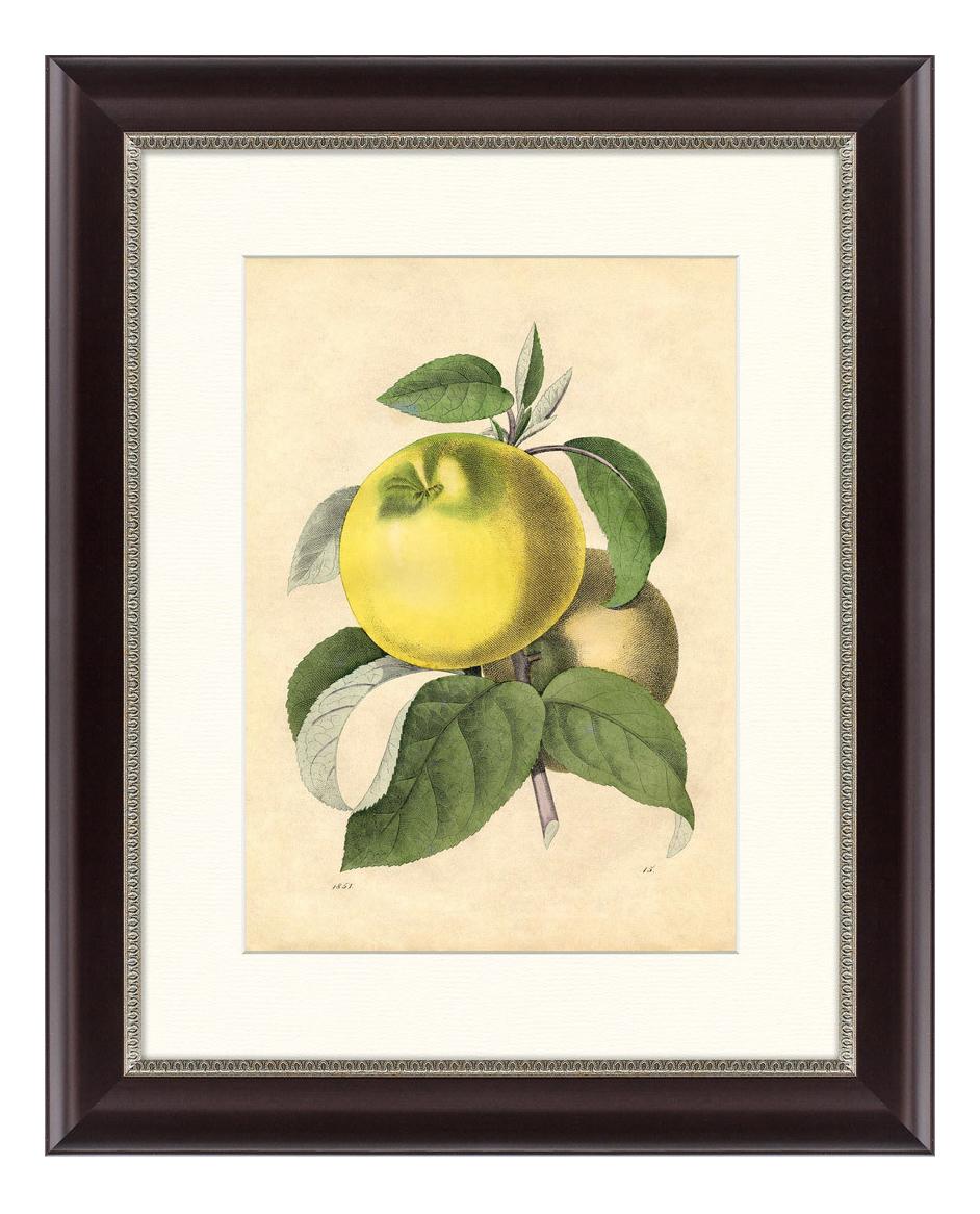Картина Картины в Квартиру Яблоко белый налив 42 х 52 см яблоко белый налив 42 х 52 см по цене 3 495