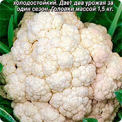 Семена Капуста цветная Елена Прекрасная, 0,3 г, АЭЛИТА