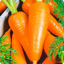 Семена Морковь Сахарная мечта F1, 1 г, Сады