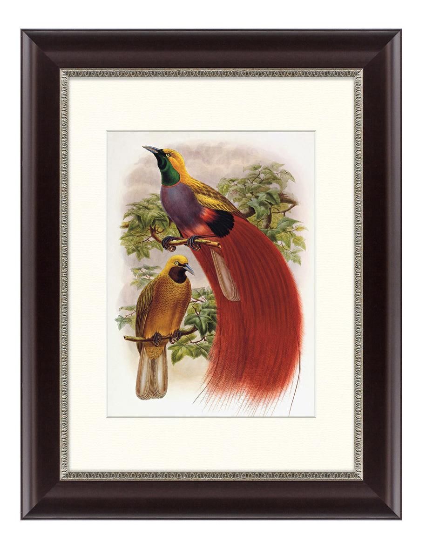 Картина Картины в Квартиру Гольдиева Райская Птица (35х45 см) фото