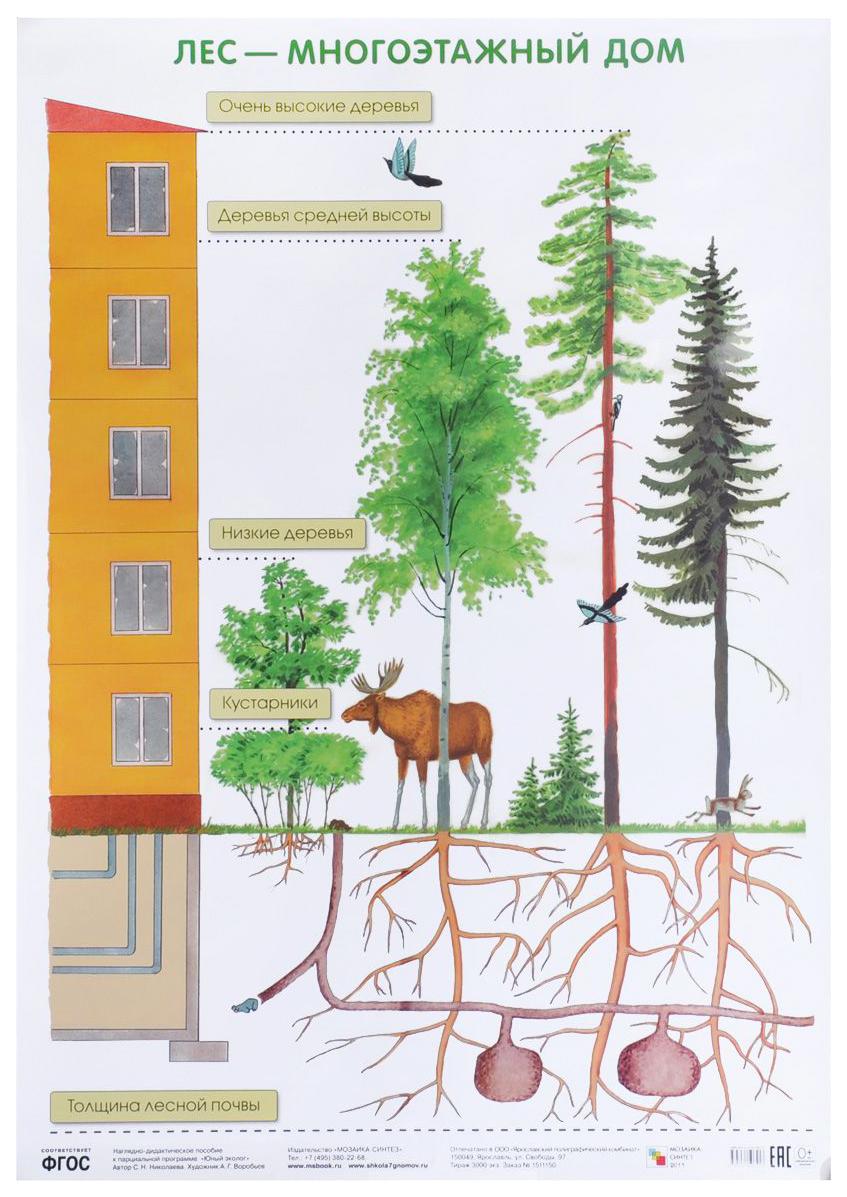 Купить Плакат «Лес - многоэтажный дом», Мозаика-Синтез, Подготовка к школе