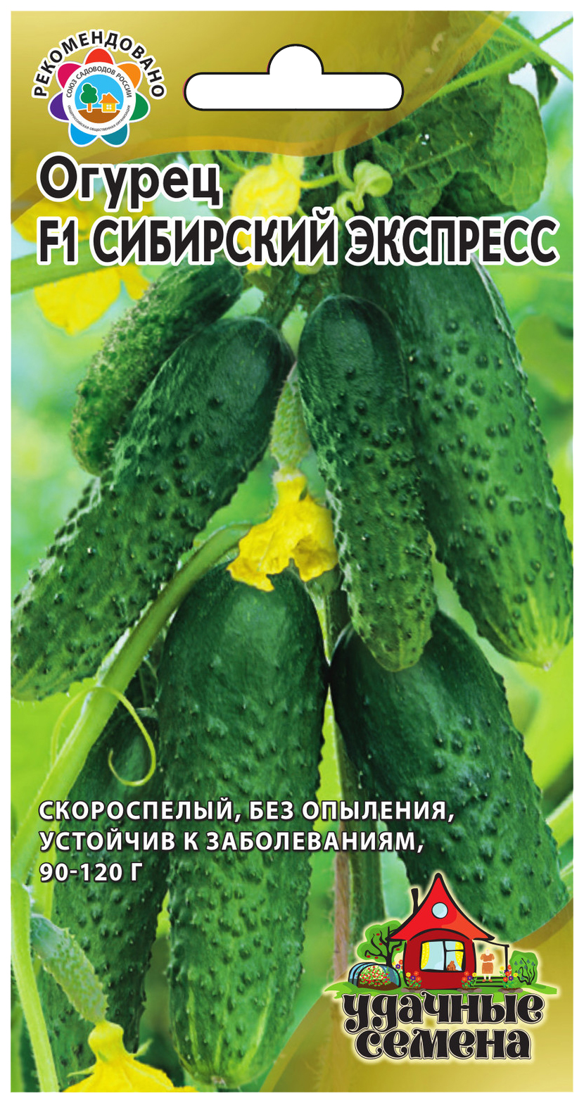 Семена Огурец Сибирский экспресс F1, 10