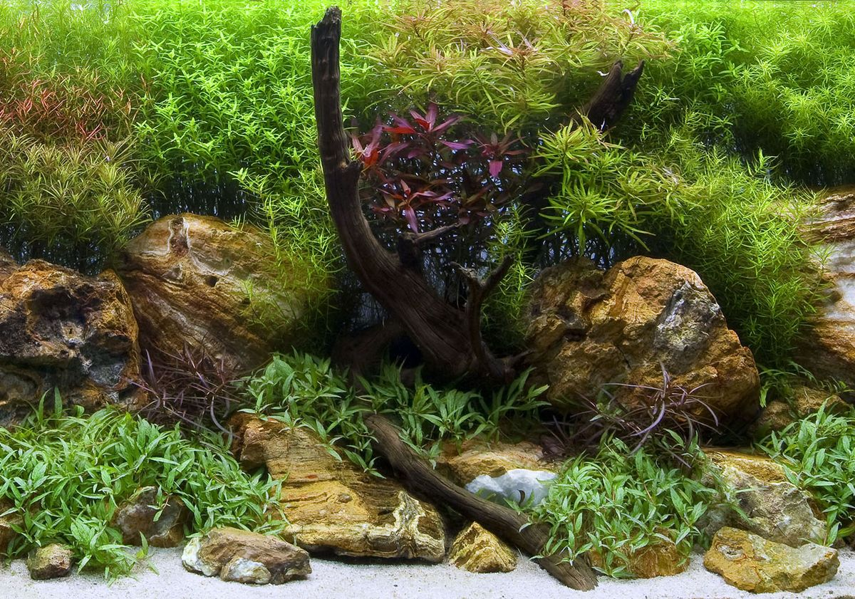 Аквариумный фон Barbus 018 двухсторонний Водный сад/Яркие