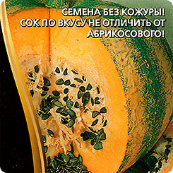 Семена Тыква Абрикосовая, 3 шт, Уральский дачник