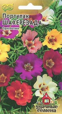 Семена цветов Гавриш Портулак: смесь Шахерезада