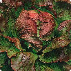 Семена Салат кочанный Трюфель, 0,5 г АЭЛИТА