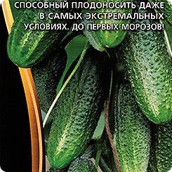 Семена Огурец Сибирская гирлянда F1, 5 шт, Уральский дачник