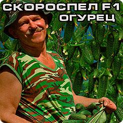 Семена Огурец Июньский Скороспел F1, 7 шт, Сибирский сад
