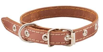 Ошейник для собак Homepet, простой простроченный кожа, коричневый, 15 мм x 28-38 см
