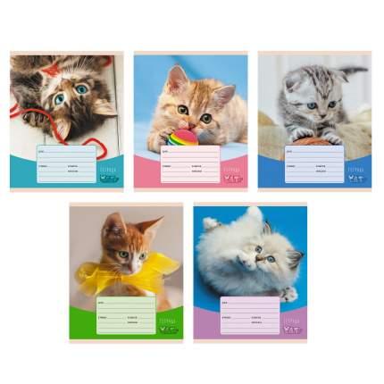 Тетрадь Listoff Игривые котята  (А5,12,скрепка,клетка) ТК127016