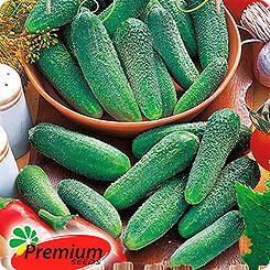 Семена Огурец Клавдия Премиум F1, 10 шт, Premium seeds