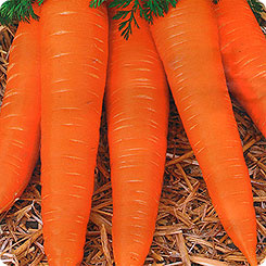 Семена Морковь Карамелька, 2 г, АЭЛИТА