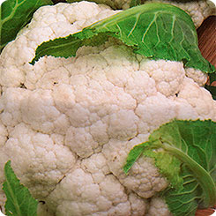 Семена Капуста цветная Сноуболл 123, 0,5 г, Русский огород