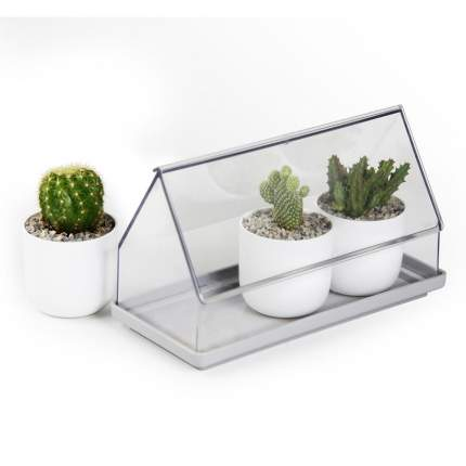 Лоток для выращивания растений Micro Green House прозрачный